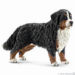 """Bernese Mountain Dog, female"""