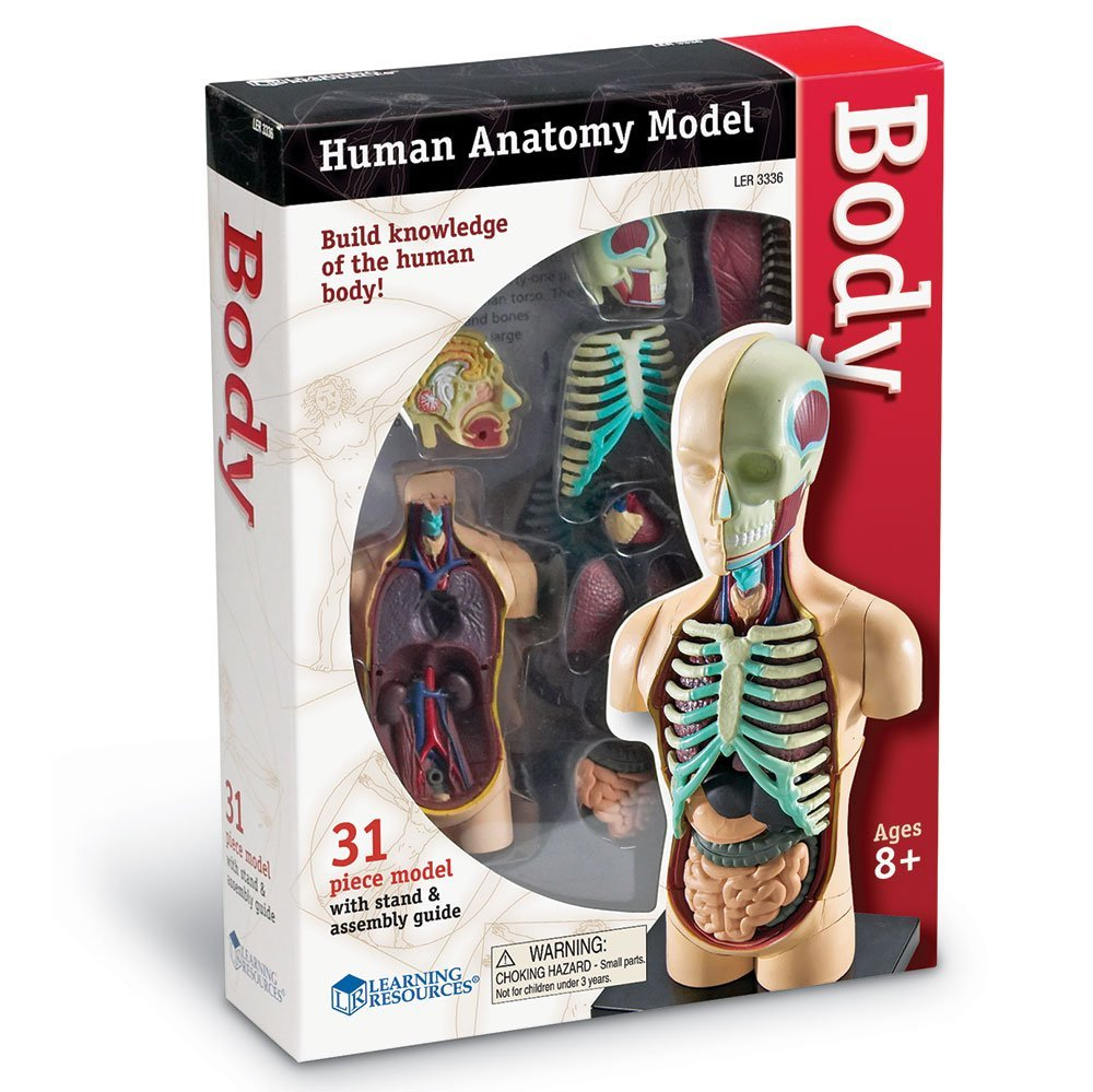 Human Body Anatomy Model - Toy Sense